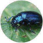 inf_bug